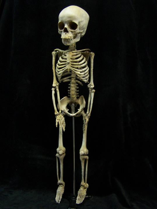 Toddler Skeleton