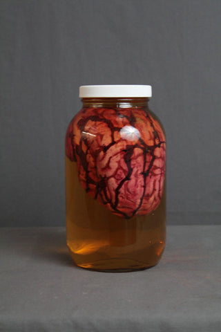 Medium Human Brain Prop in a Large Specimen Jar