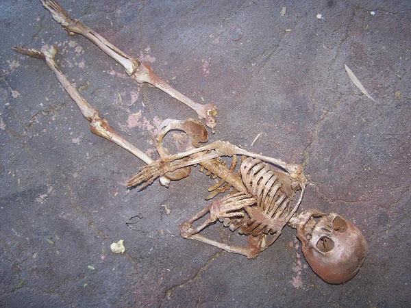 Toddler Crime Scene Skeleton