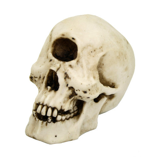 Cyclops Skull Decor