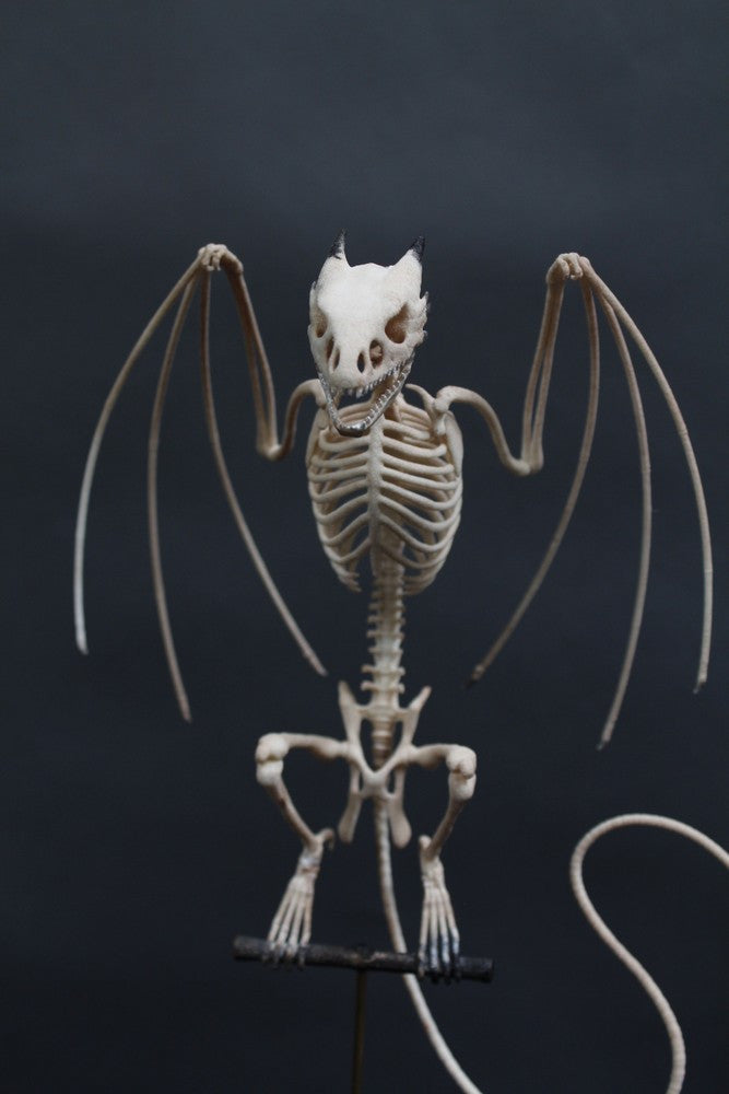 Perched Wyvern Dragon Skeleton