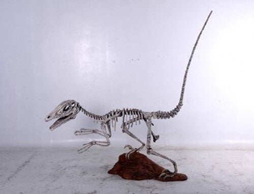 10 Ft Long Raptor Skeleton Rental