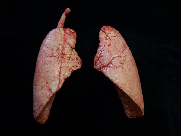 Lungs Pair, large
