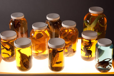 Replica Specimen Jar Assortment 10 Pcs