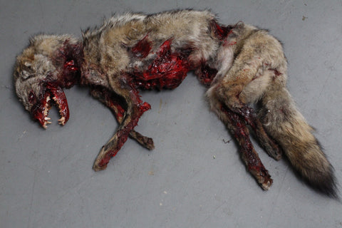 Roadkill Coyote Prop