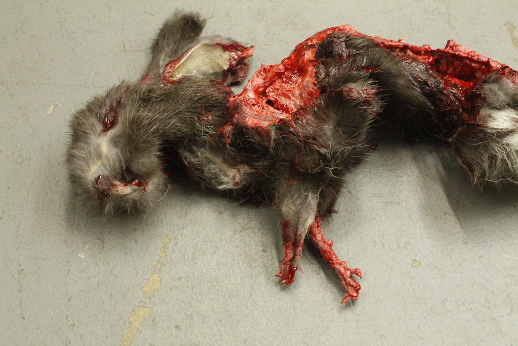 Roadkill Rabbit Prop