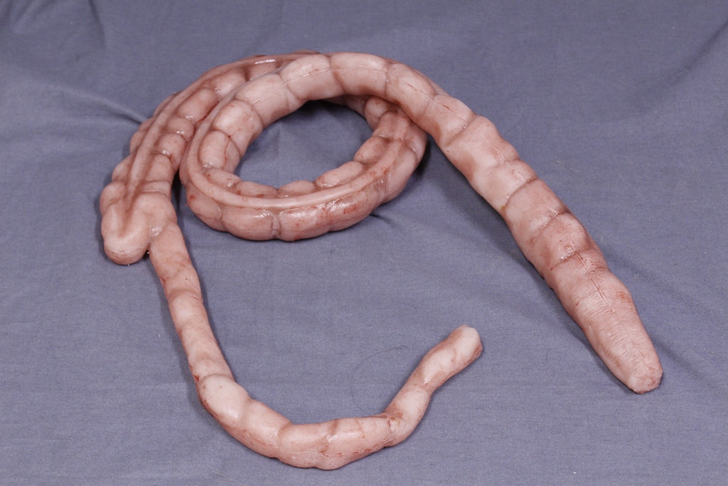 Silicone Large Intestine