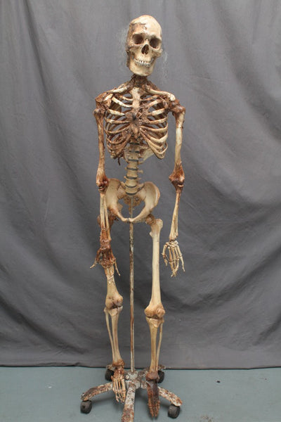 Skin and Bones Skeleton