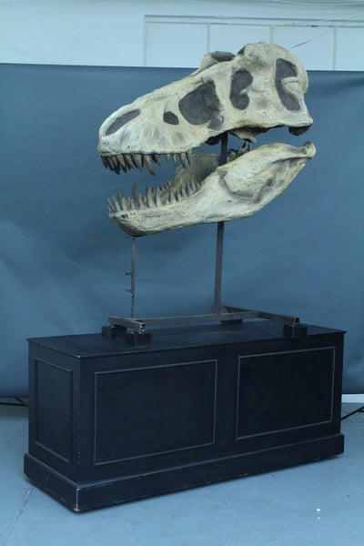T-Rex Skull With Base Rental