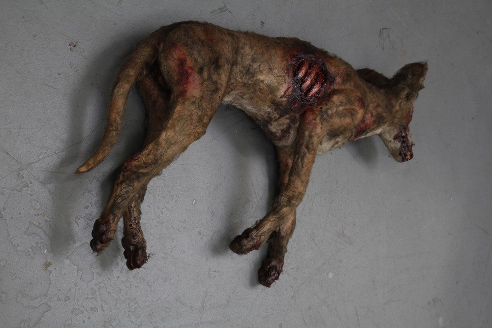 Wounded Brown Dog Prop