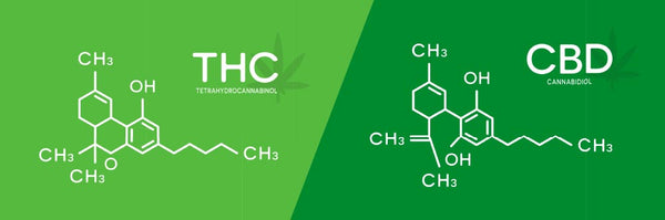 molecular difference between thc and cbd
