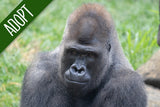 Adopt An Animal - Gorilla