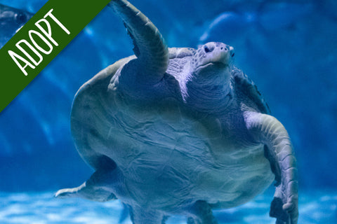 Adopt An Animal - Sea Turtle