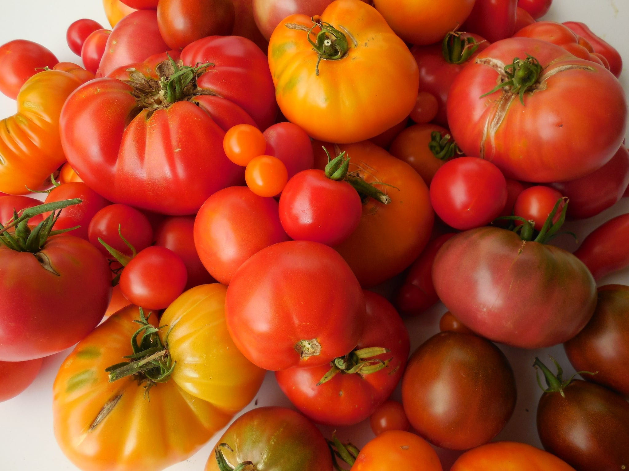 Favorite Tomato Varieties - from Sandiaseed.com
