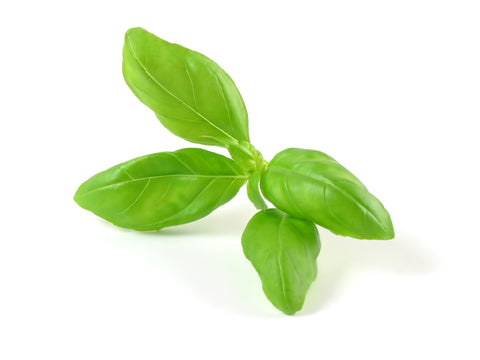 Basil - Pepper Companion Plants