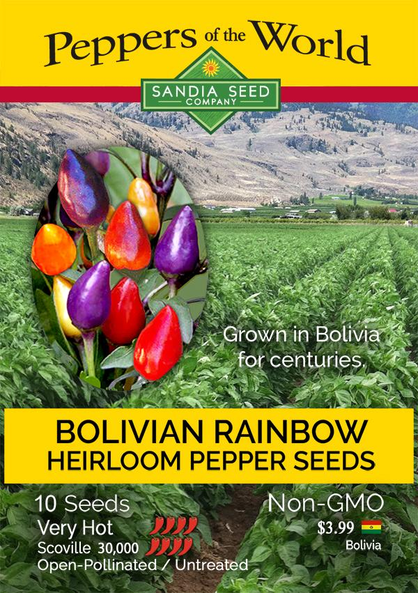 Purple Peppers - Bolivian Rainbow Pepper Seeds