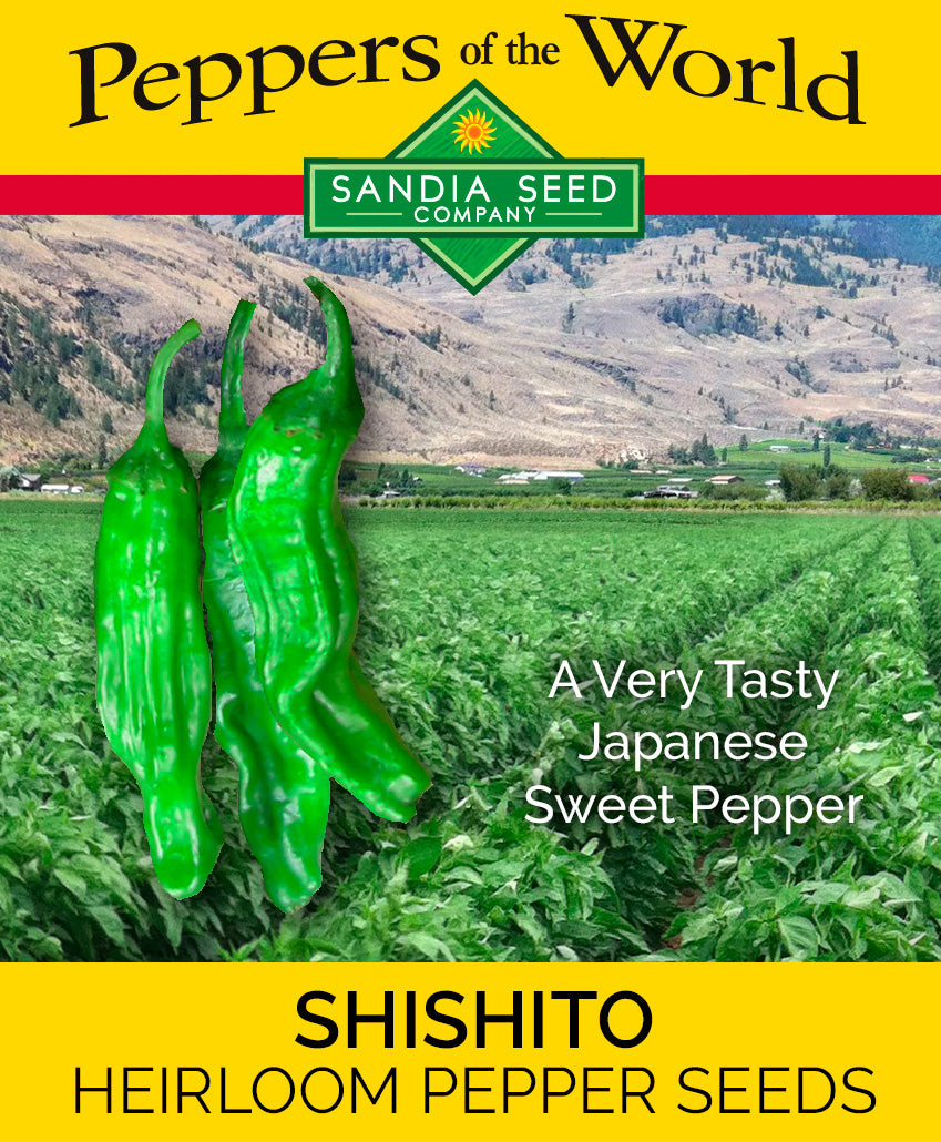 Bulk Pepper Seeds - Bulk Shishito Seeds