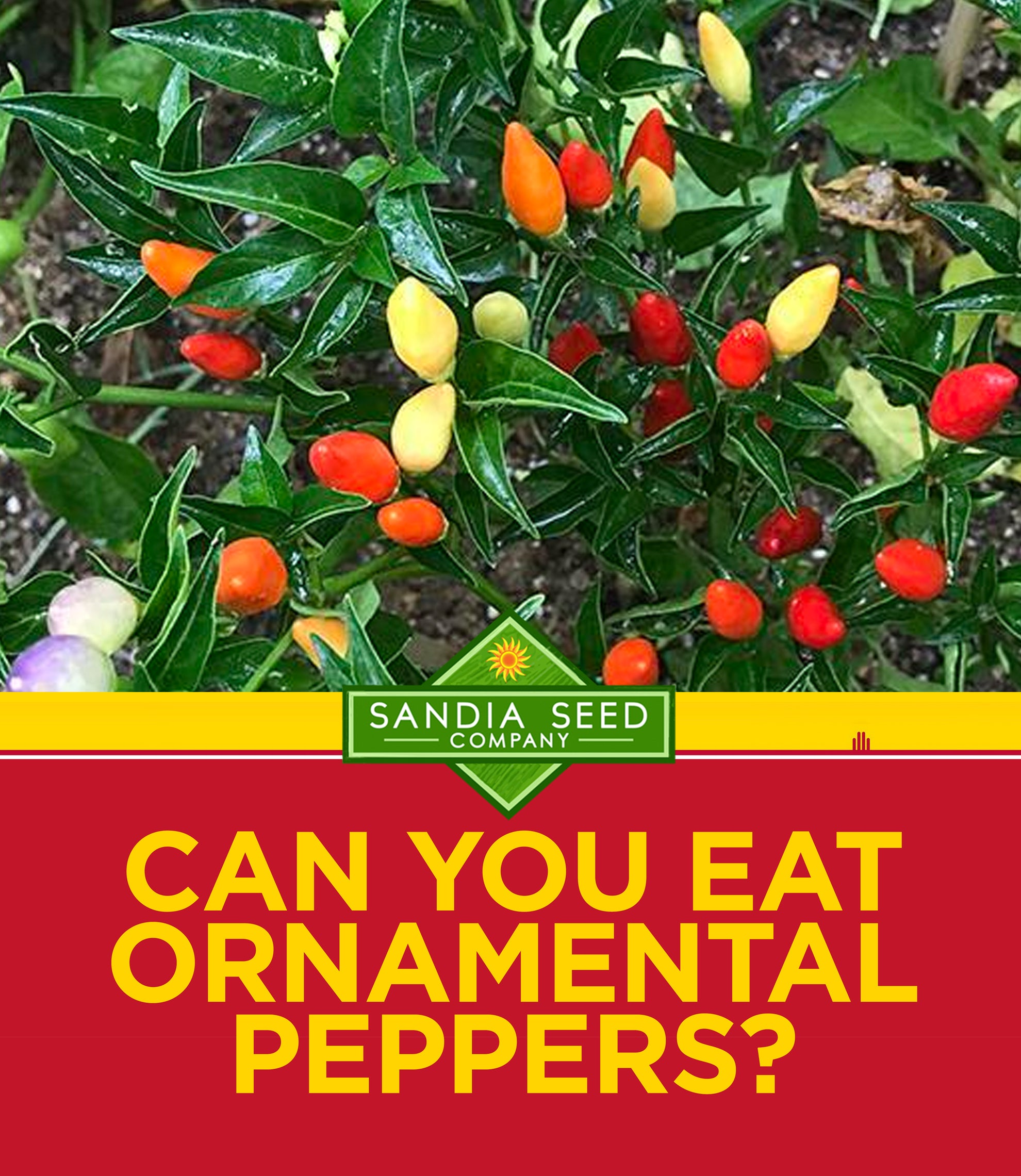 Can You Eat Ornamental Peppers?