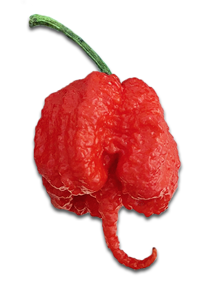 Fastest Growing Hot Peppers: Carolina Reaper