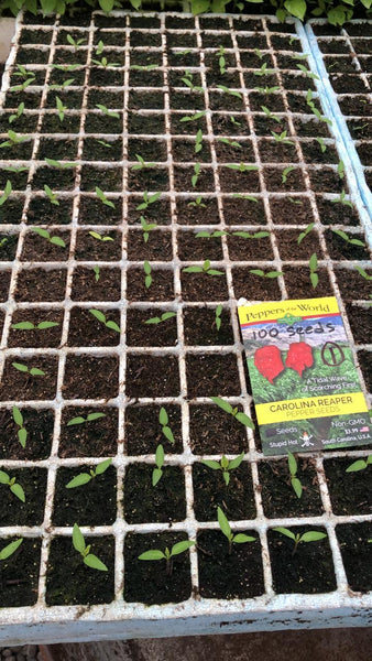 Why didn't my pepper seeds germinate?