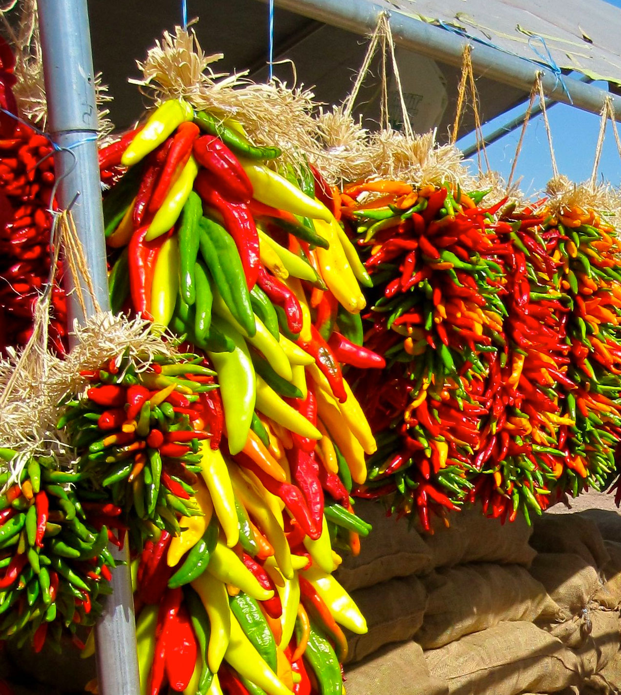 Ornamental Peppers - can be dried into Ristras