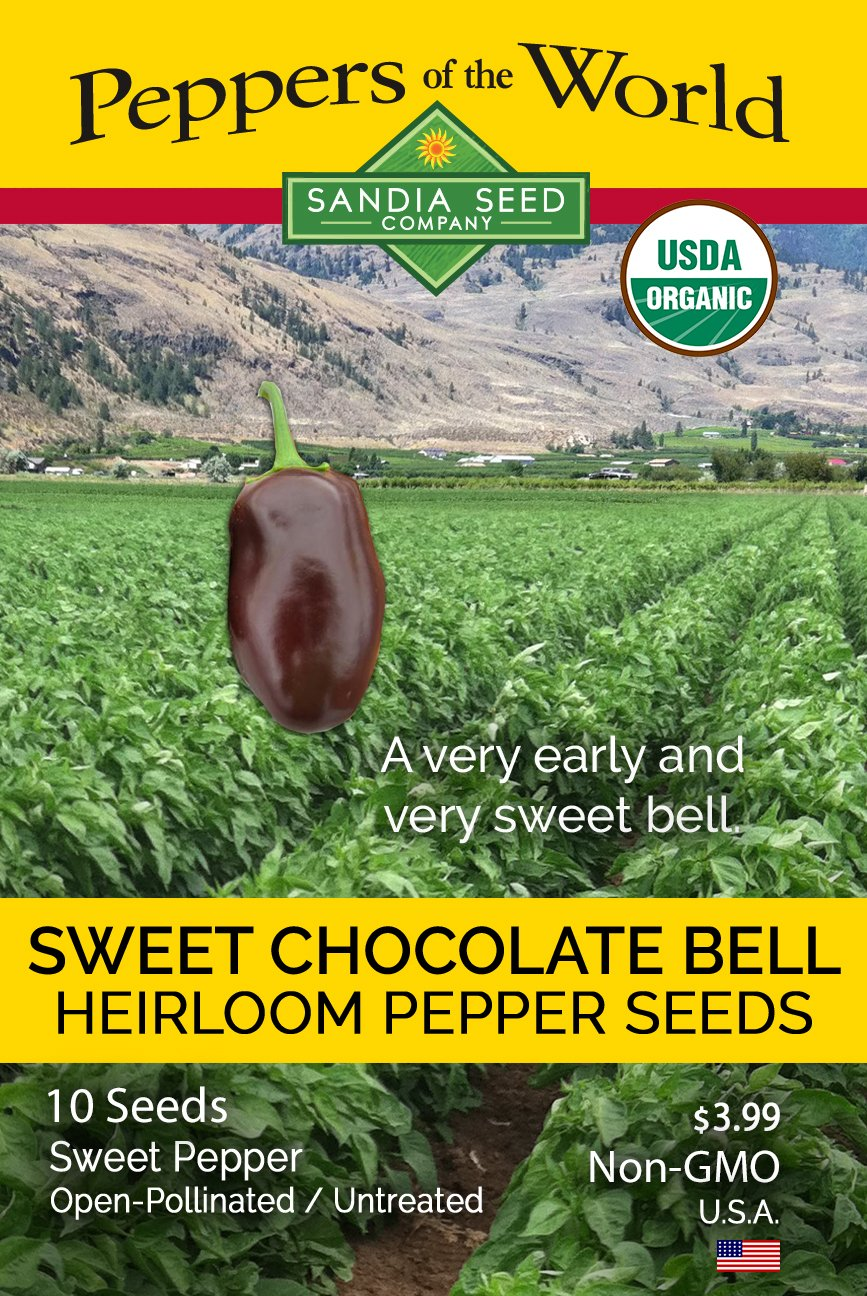 Chocolate Sweet Bell Pepper - Purple Pepper Seeds