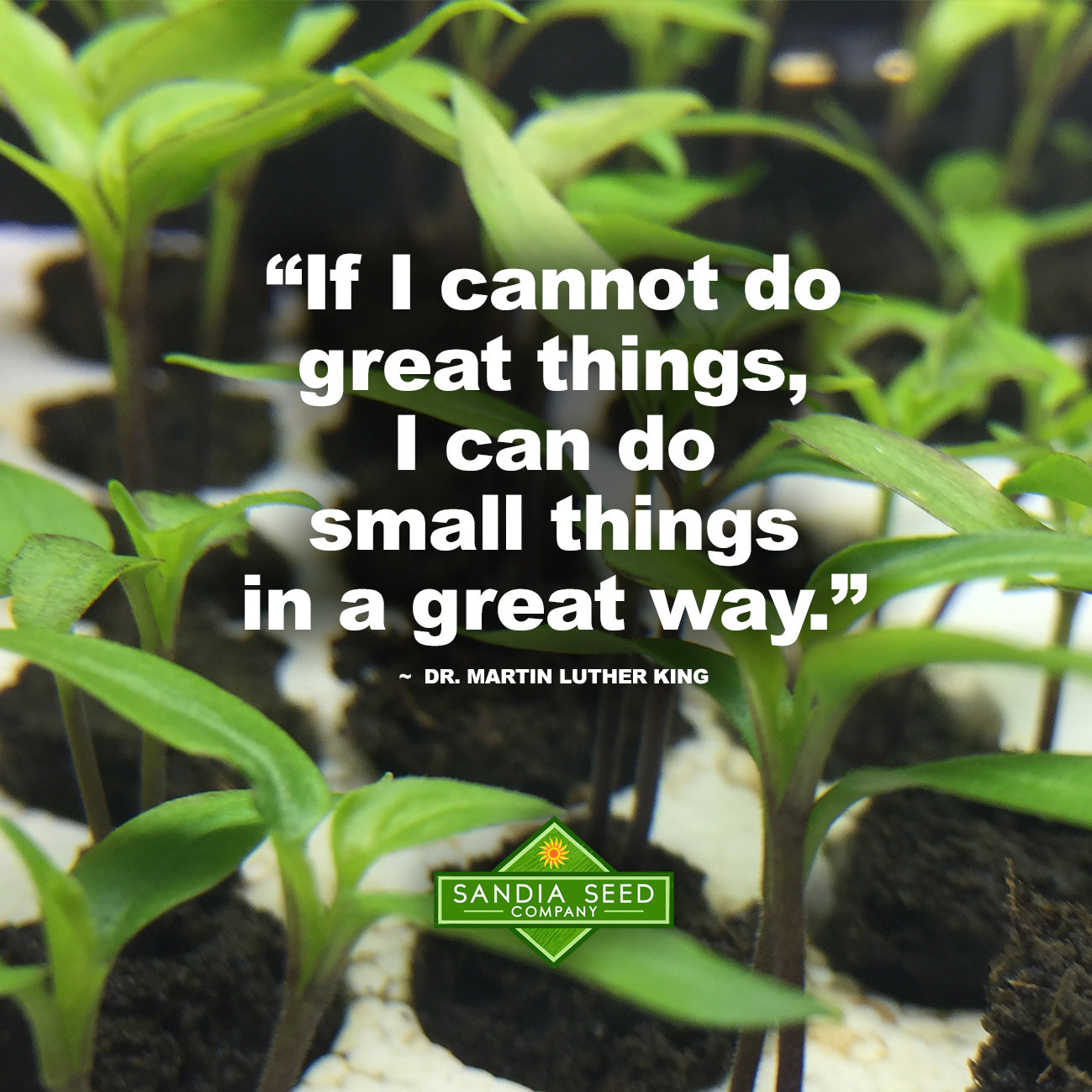 Garden Quote: If I cannot do great things, I can do small things in a great way. Mt. Luther King Jr.