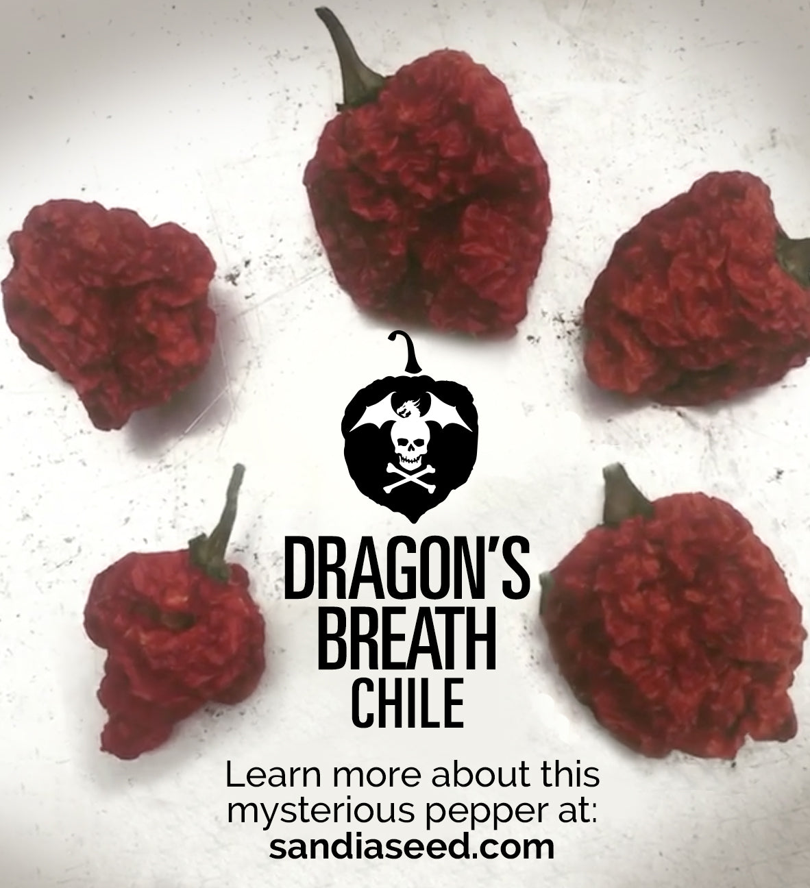 Dragon's Breath Pepper Seeds