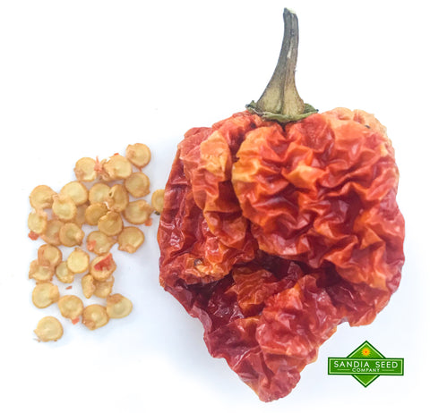 Dragons Breath Chili Seeds from SandiaSeed.com
