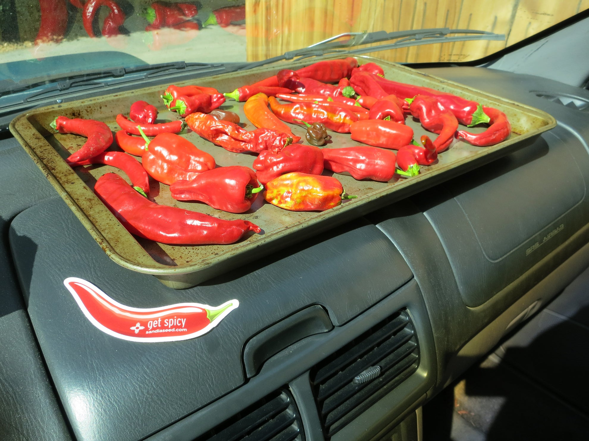 How to Dry out your chile peppers - dry them in your hot car!