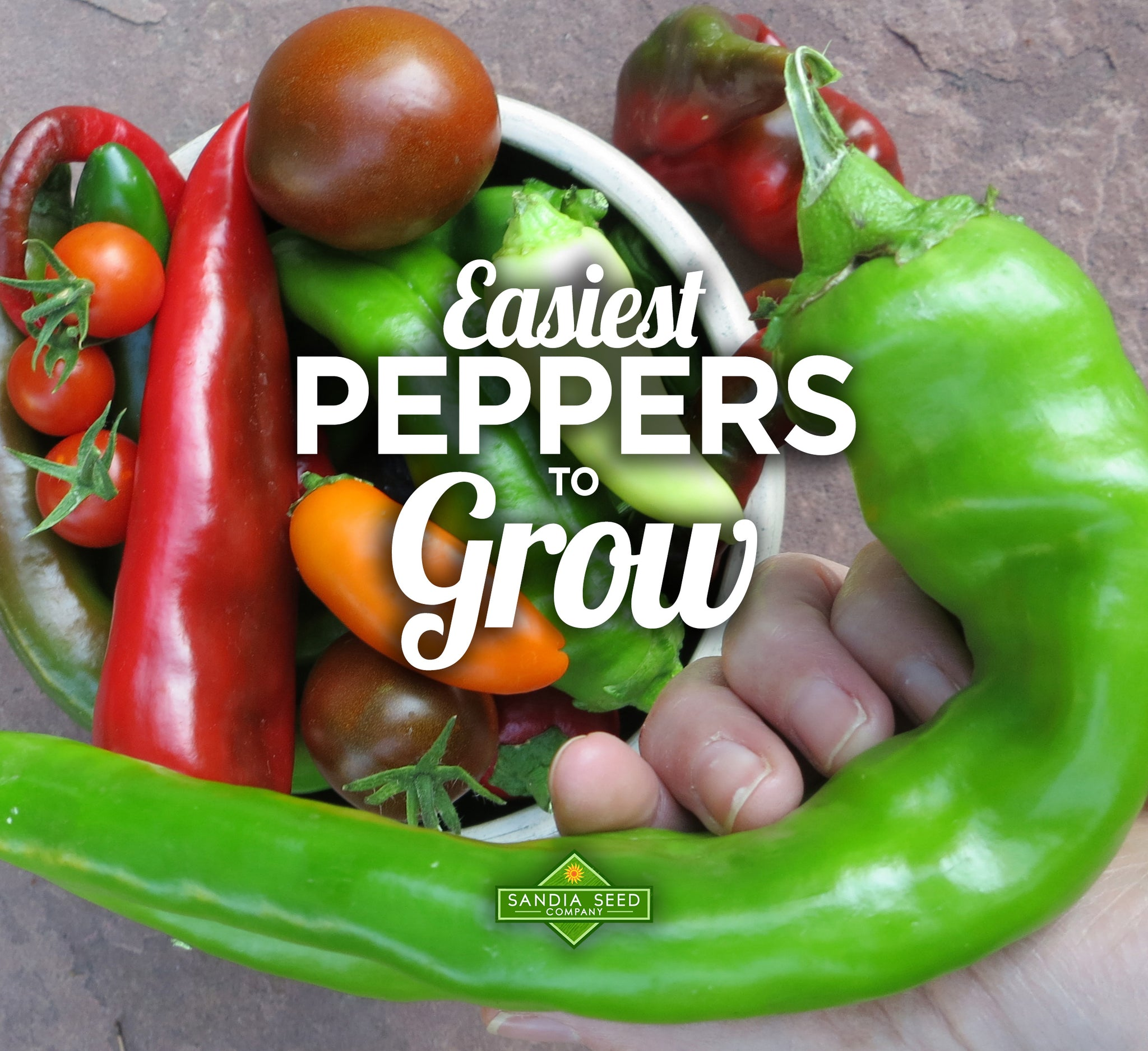 Easiest Pepper to Grow!