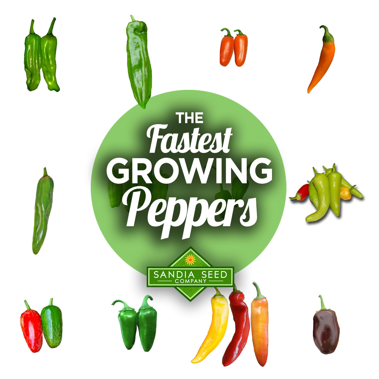 Fastest Growing Peppers - Grow these so Peppers Ripen before the Cold Weather!