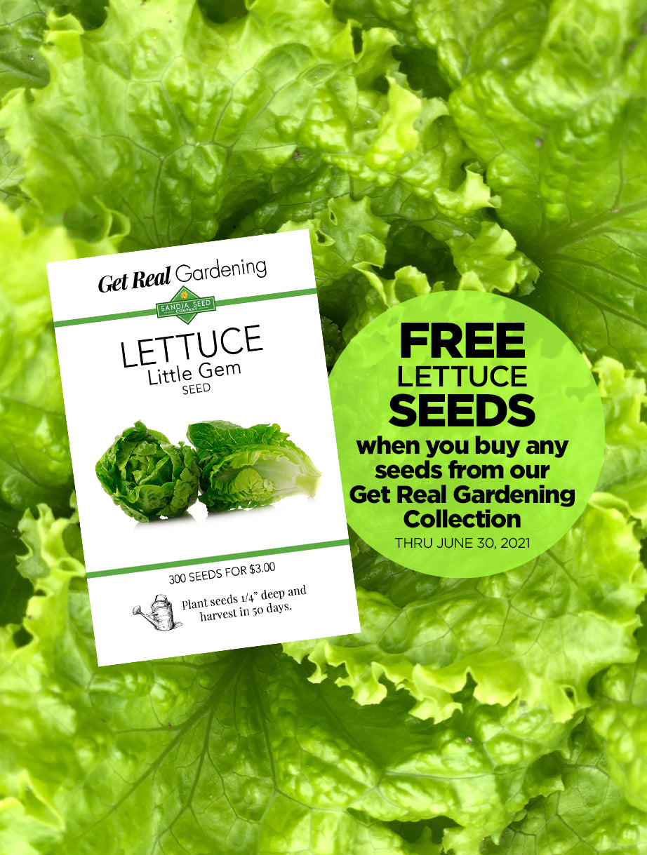 Free Seeds for Lettuce from SandiaSeed.com