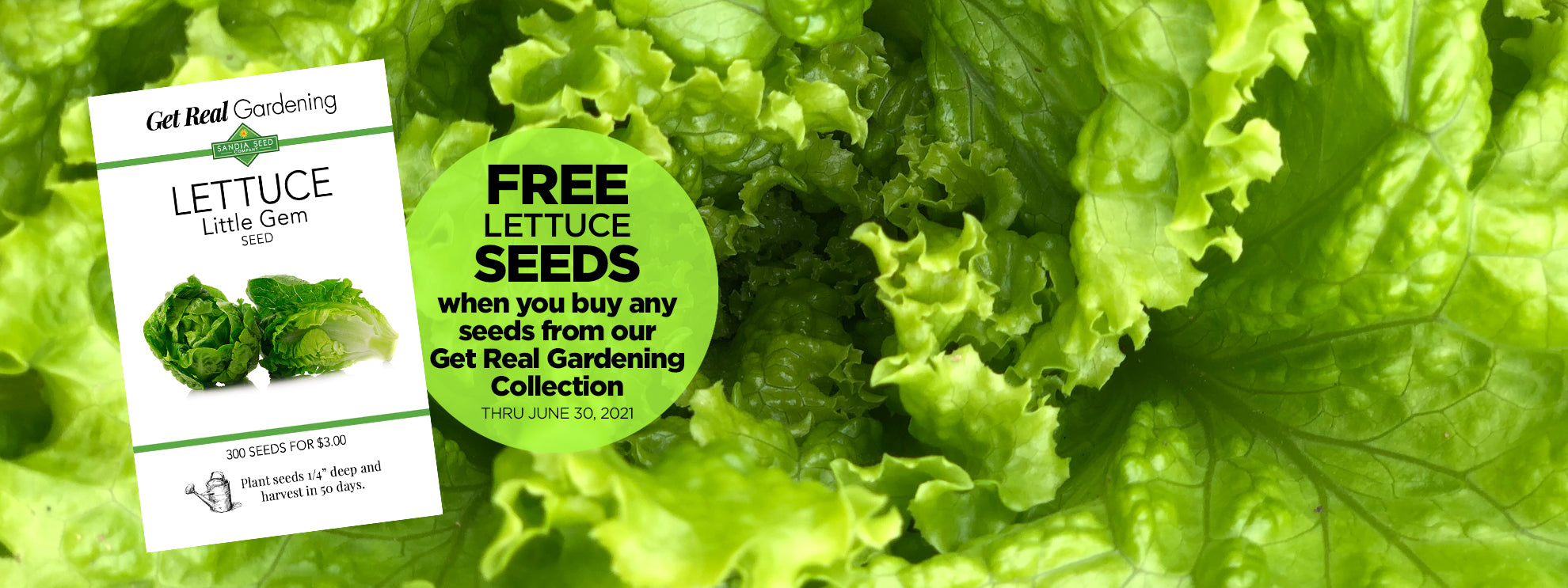 Free Lettuce Seeds from sandiaseed.com