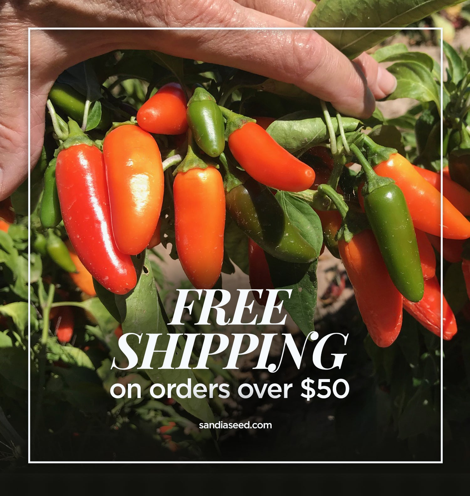 FREE SHIPPING SEEDS from Sandiaseed.com