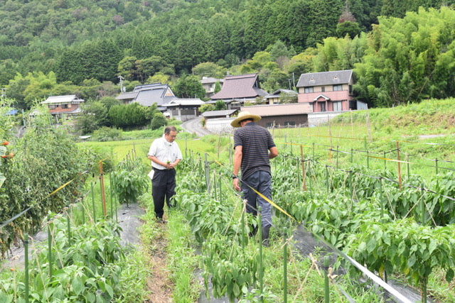 Green Chile Farm in Japan