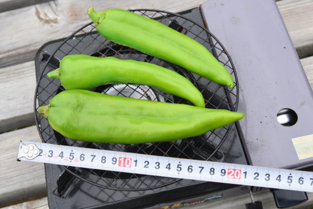 Green Chiles grown from seed in Japan