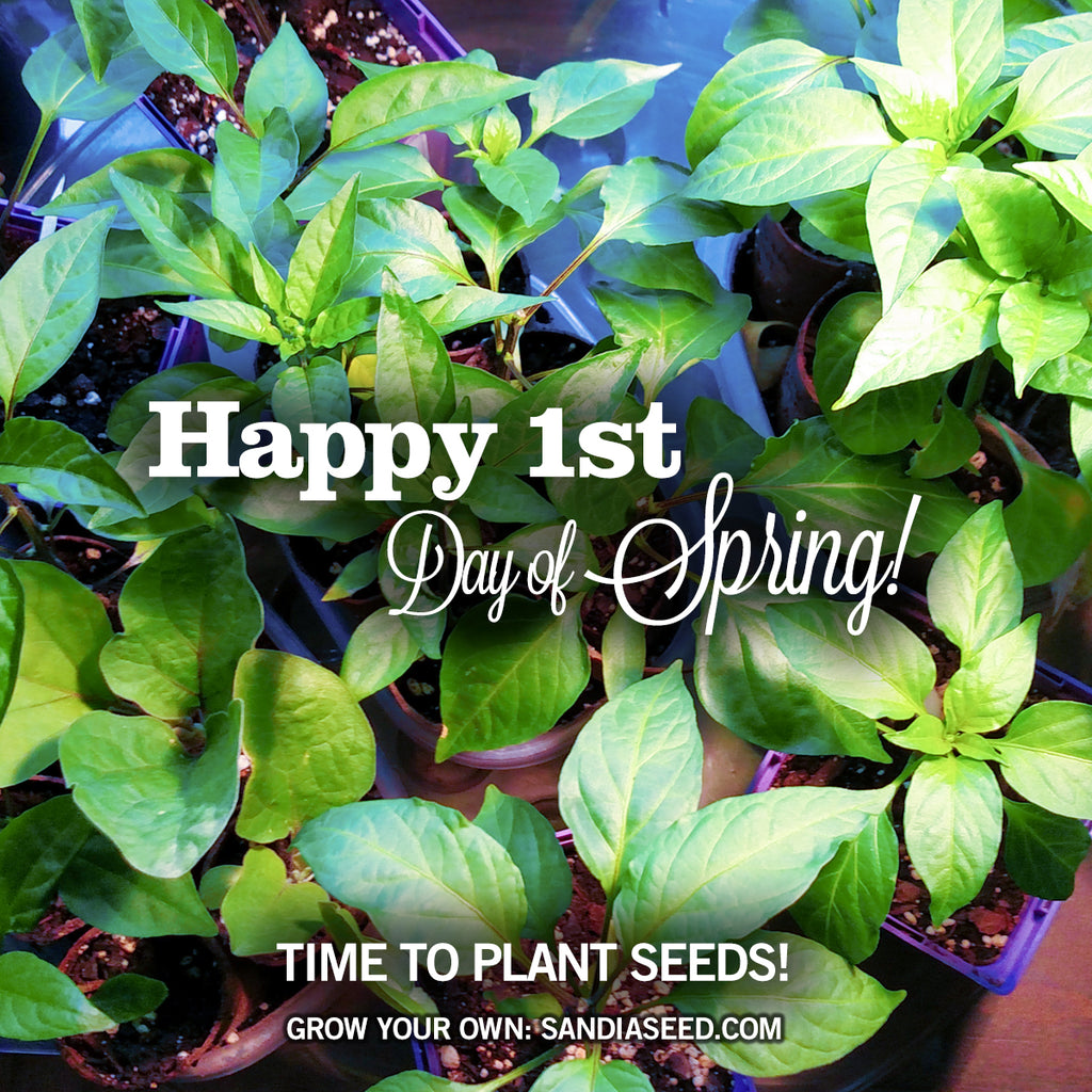 Happy 1st Day of Spring! Time to plant pepper seeds!