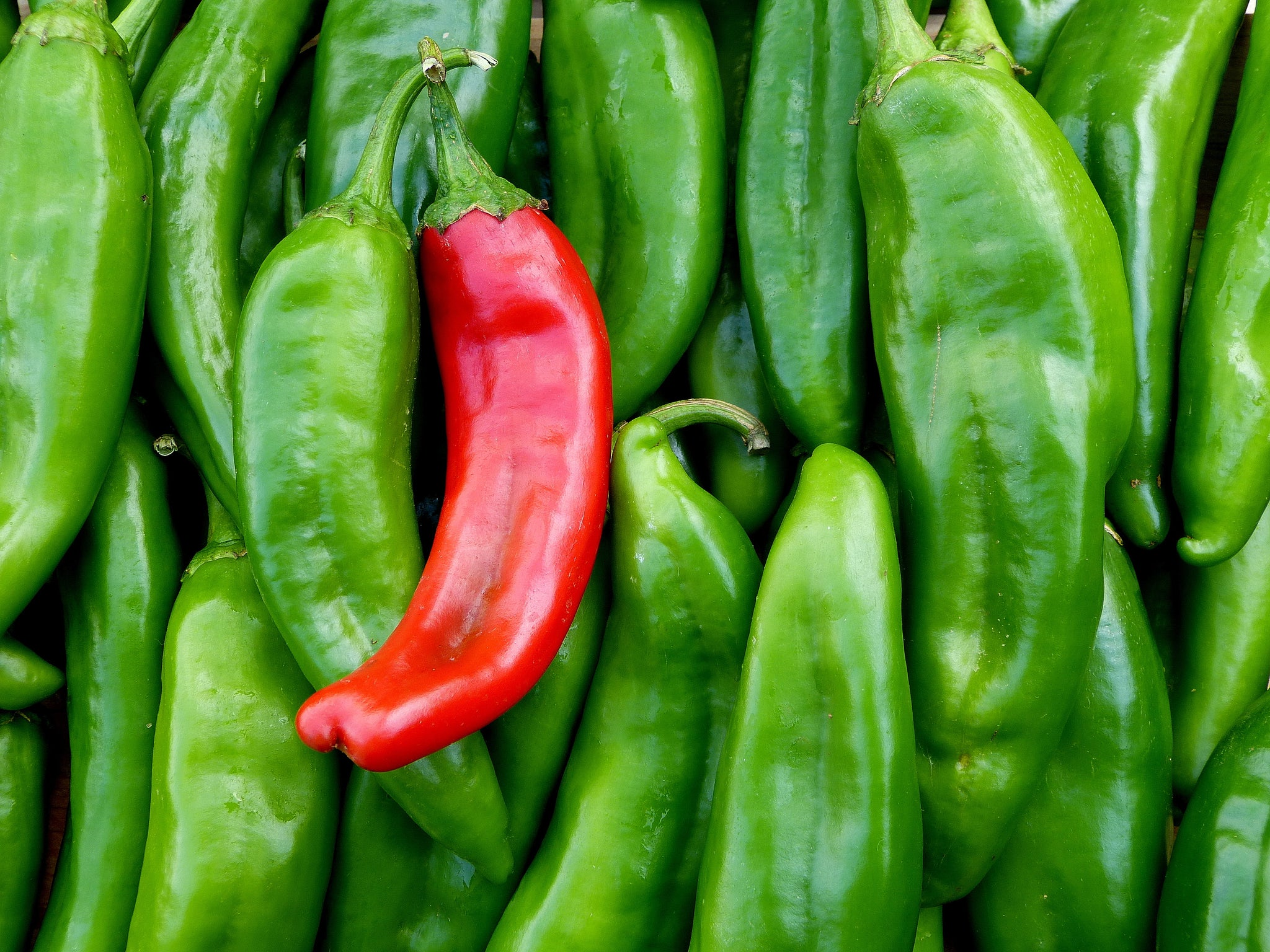 Red Chile and Green Chile are the Same Thing!