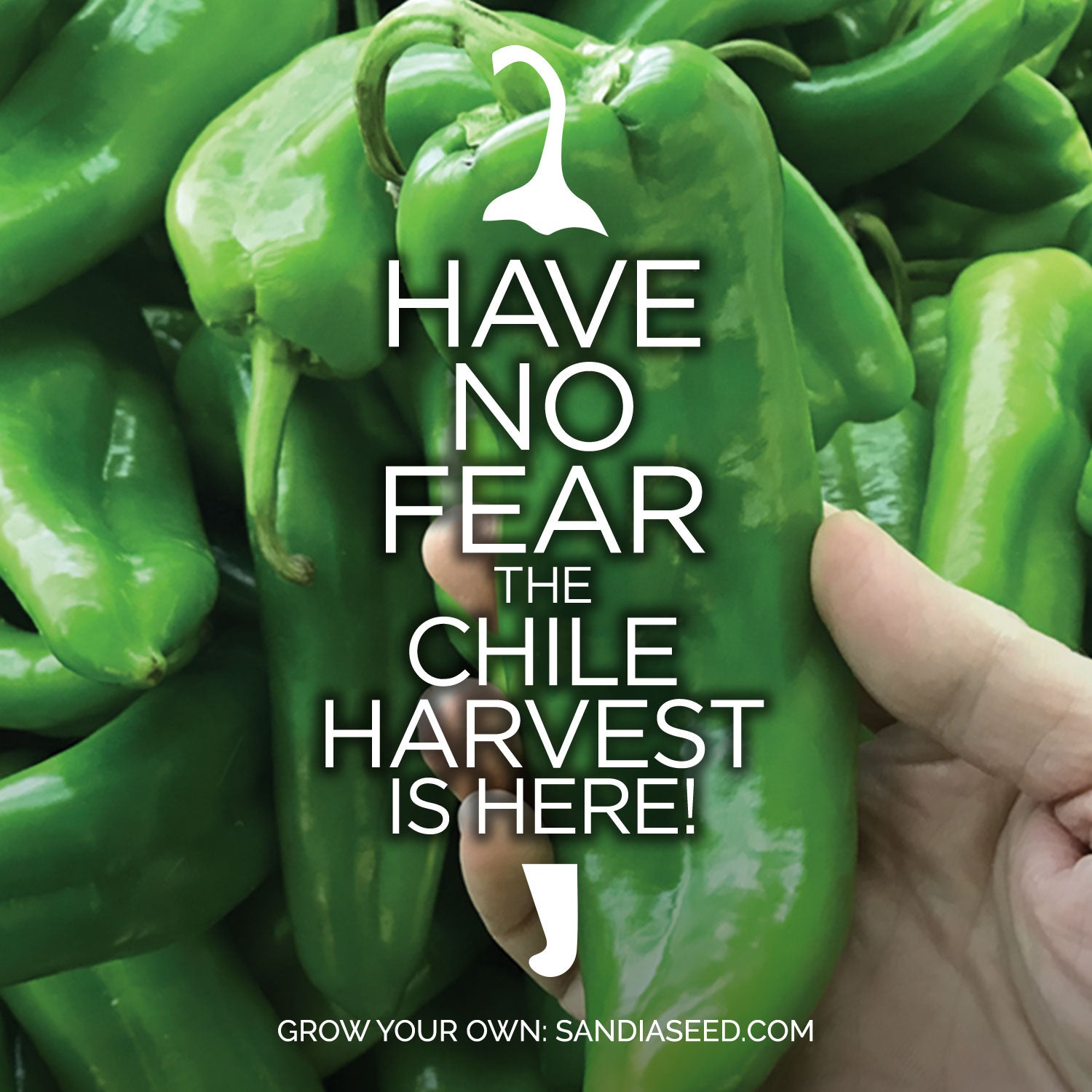 Have No Fear the Chile Harvest is Here