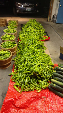 Growing Hatch Chile in Wyoming