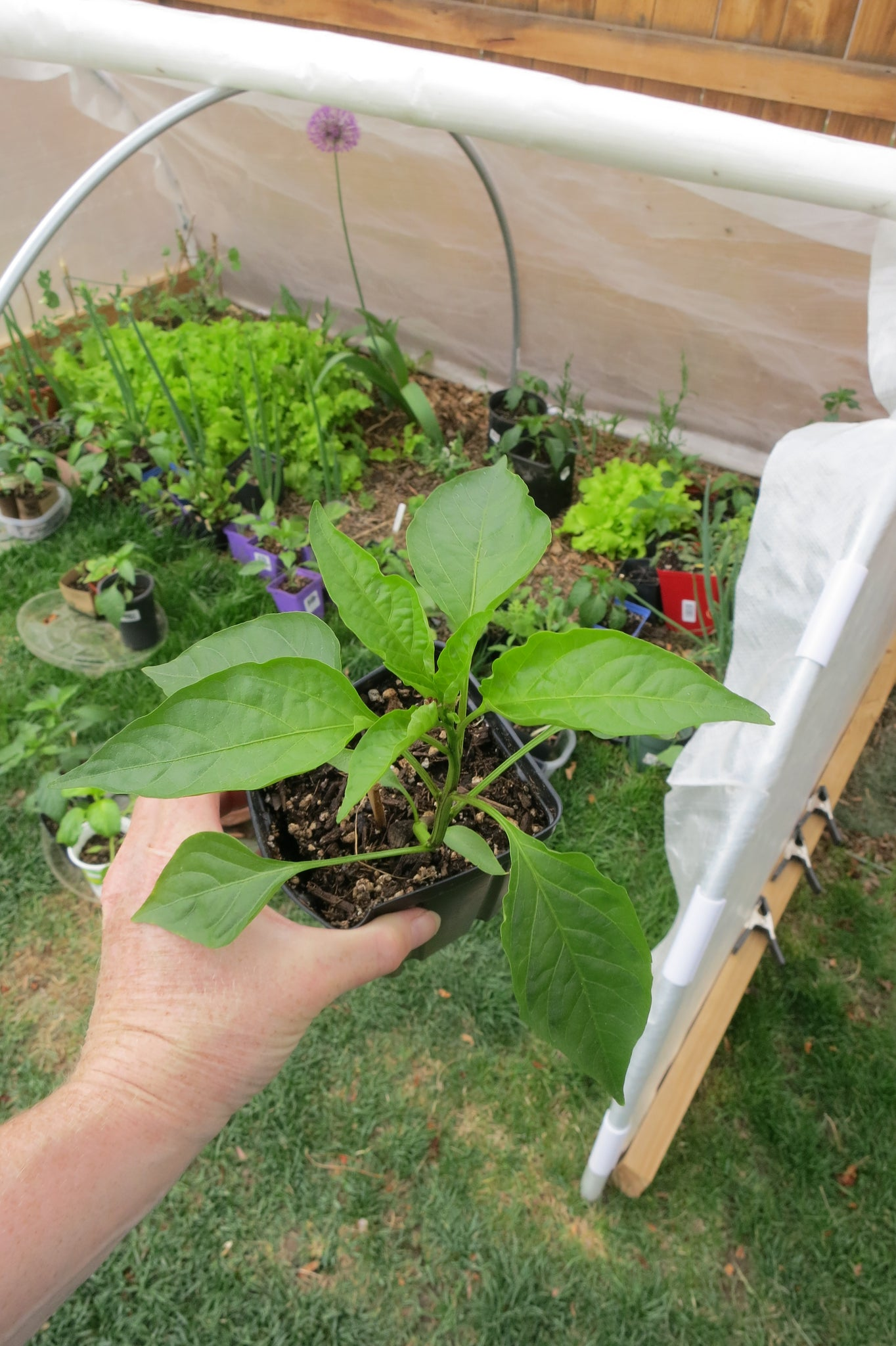 How to keep your pepper plants happy and growing fast