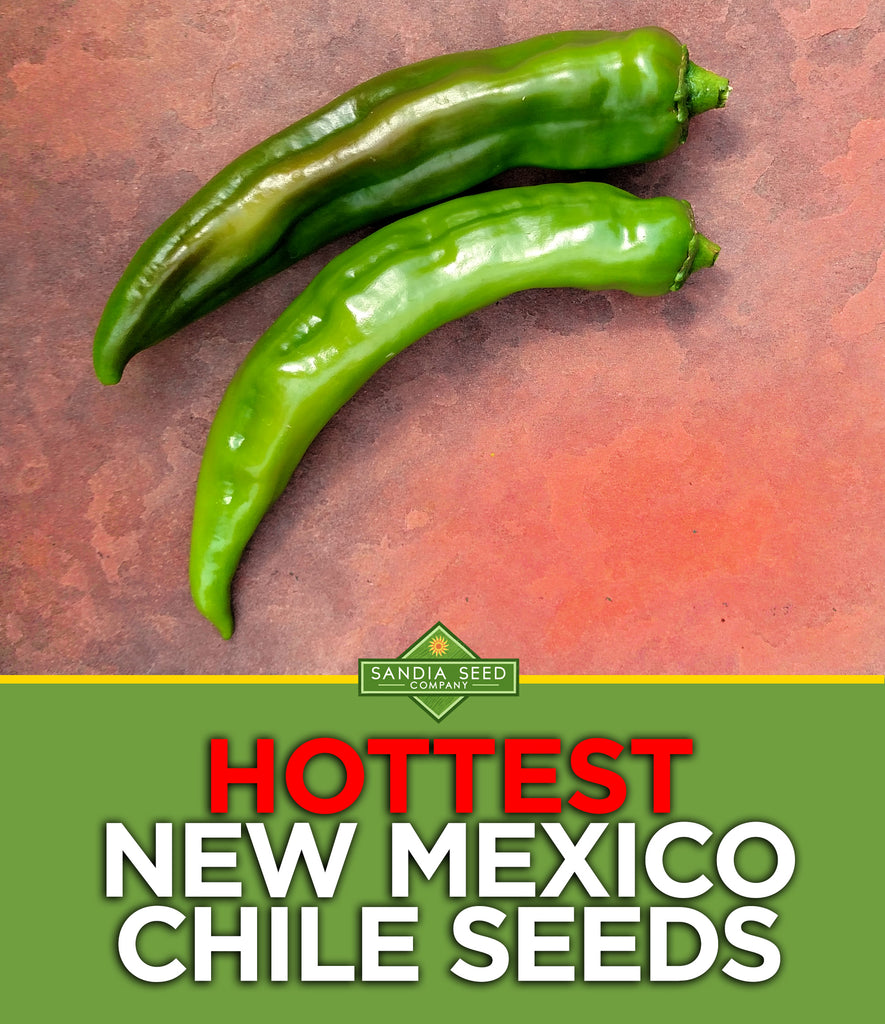 Hottest New Mexico Chile Seeds