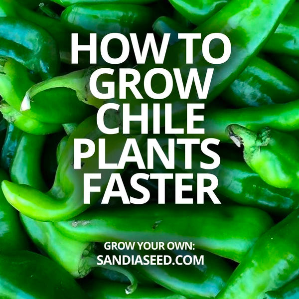 Big Jim Chile - how to grow Big Jim Chili pepper plants faster!