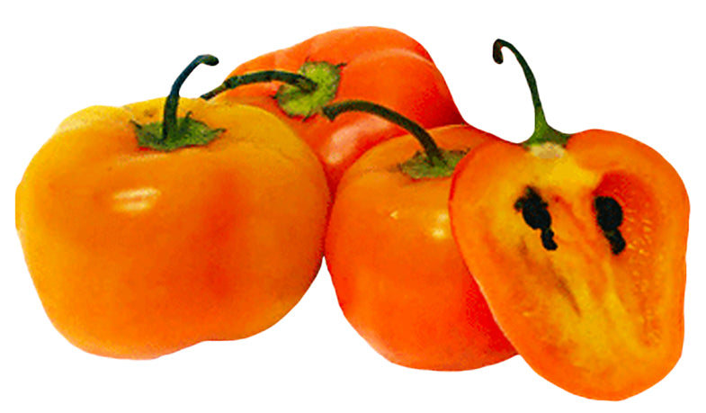 Can peppers survive 40 degrees? Manzano peppers can take low temperatures.