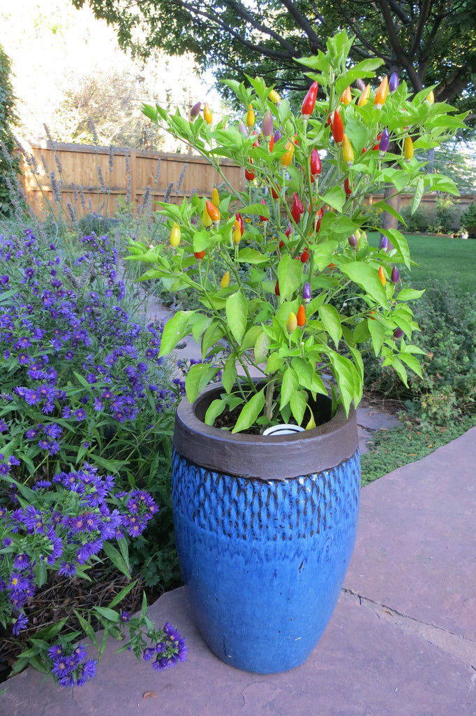 Plant Perennials near your Vegetable and Pepper Garden