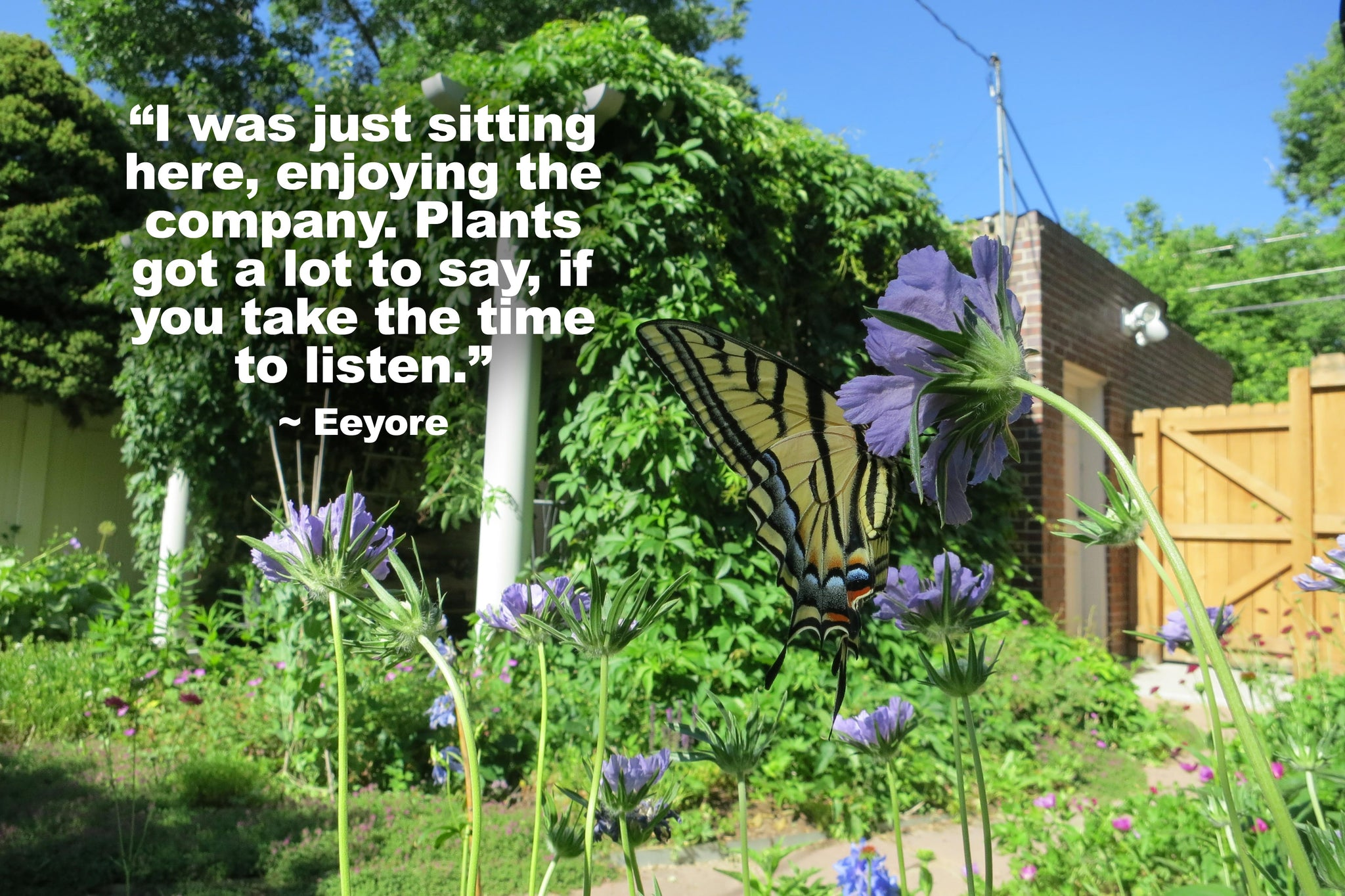 Garden Quote: I was just sittin' here enjoyin' the company. Plants got a lot to say, if you take the take to listen ~ Eeyore
