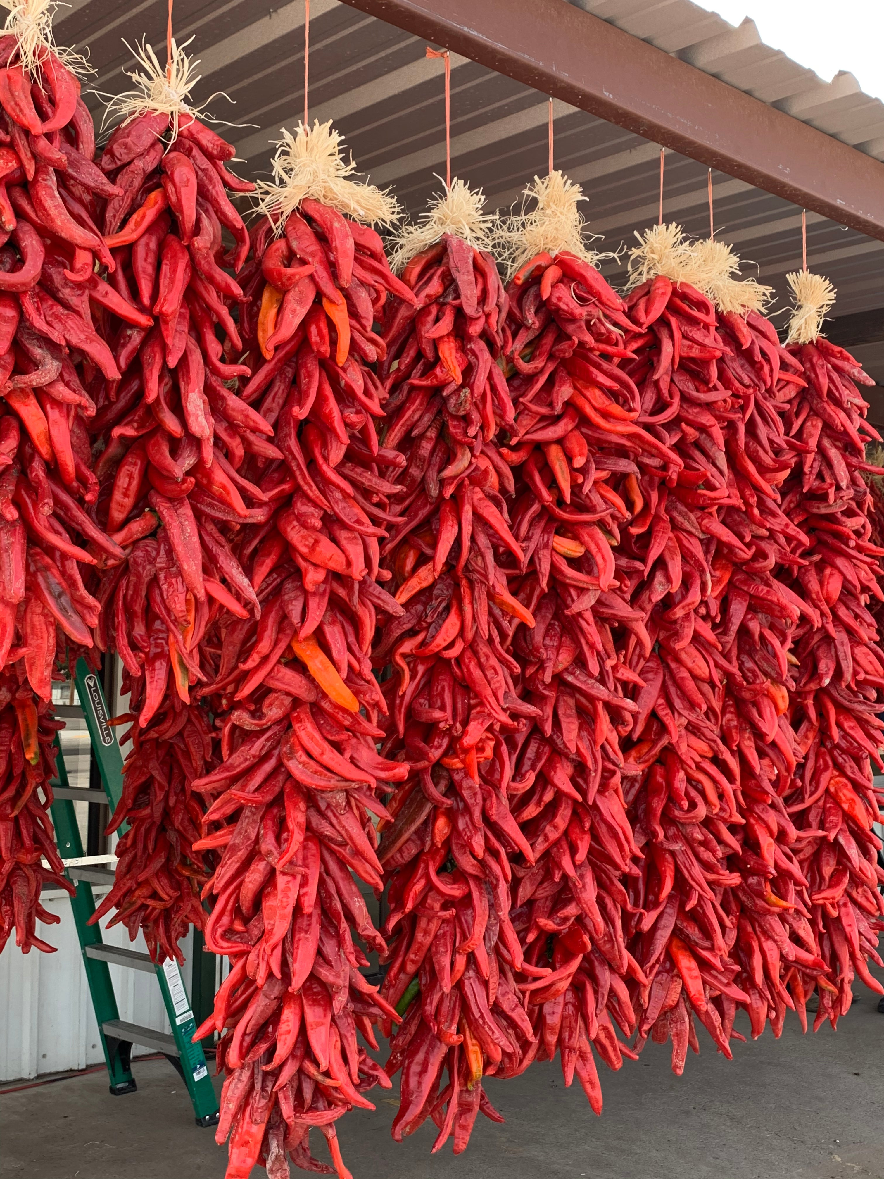 Dried Red Chile Pods - Ristras