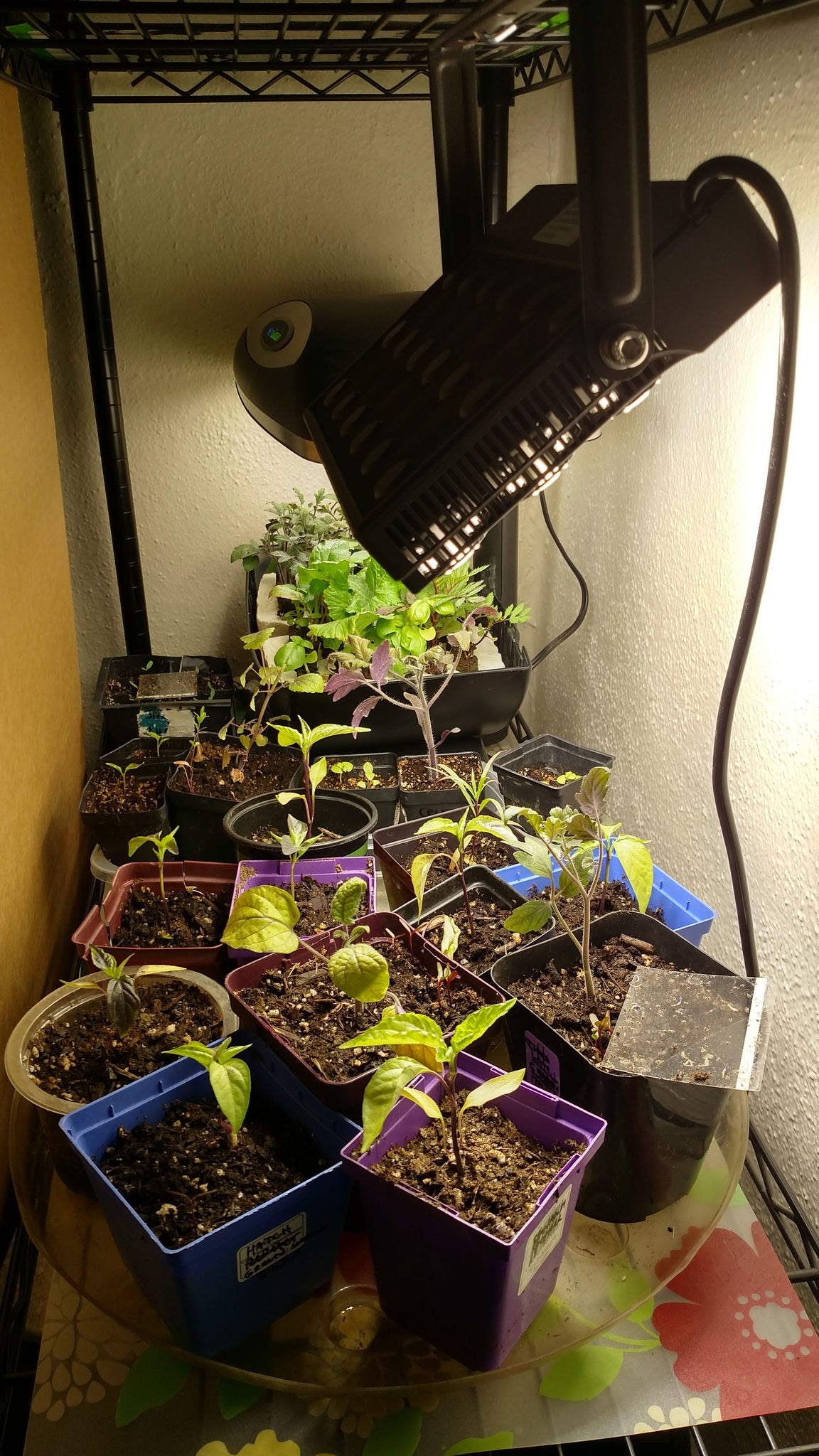 Too Bright LED Lights (too close to pepper plants)