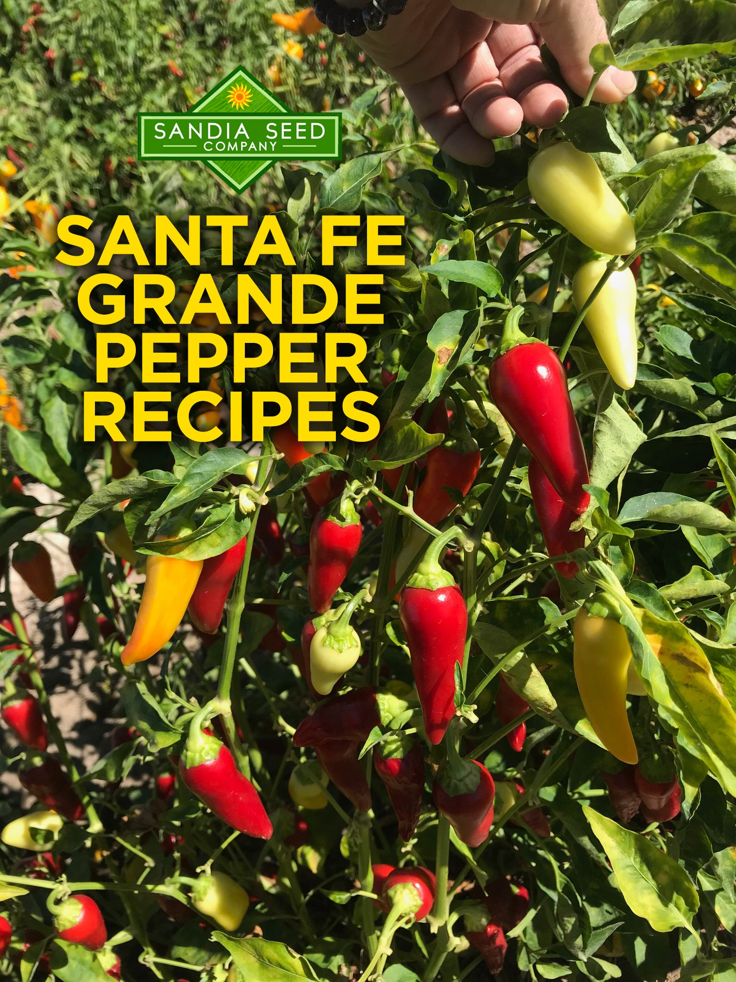 Santa Fe Grande Pepper Recipes
